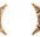 decor-estrella-teracon-terra